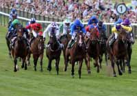 ibcbet horse race